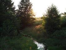 paesaggio Raggi caldi del tramonto tramite la corrente nella foresta di estate fotografia stock libera da diritti