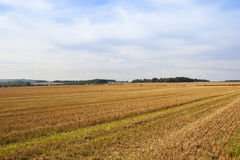 Paesaggio recente del raccolto Immagini Stock Libere da Diritti