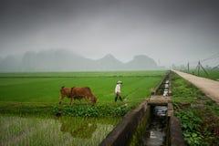 Paesaggio, risaie e montagne asiatici Fotografia Stock Libera da Diritti