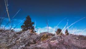 Paesaggio roccioso con gli alberi distanti Immagine Stock