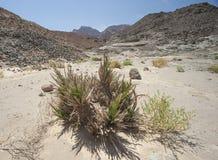 Paesaggio roccioso del deserto nell'ambiente a distanza Fotografie Stock