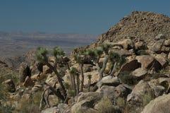 Paesaggio roccioso dell'albero di Joshua fotografia stock libera da diritti