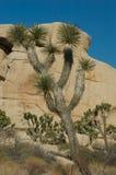Paesaggio roccioso dell'albero di Joshua fotografia stock