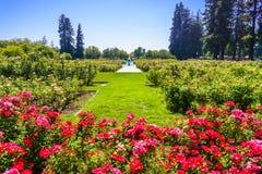 Paesaggio in Rose Garden municipale, San José, California fotografie stock libere da diritti