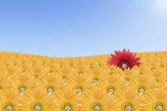 Paesaggio rosso del fiore Immagini Stock