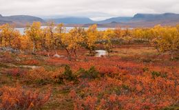 Paesaggio rosso e giallo del prato di autunno in Lapponia con il fiume ed il lago Buona immagine del backround Immagini Stock