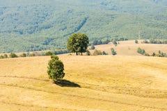 Paesaggio rumeno della montagna immagine stock
