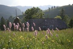 Paesaggio rumeno tipico della montagna Immagini Stock Libere da Diritti