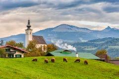 Paesaggio rurale alpino tradizionale Immagine Stock