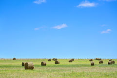 Paesaggio rurale australiano del campo con i mucchi di fieno Fotografia Stock Libera da Diritti