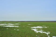 Paesaggio rurale Campo verde del frumento autunnale con i vicoli della neve Sorgente in Ucraina immagini stock