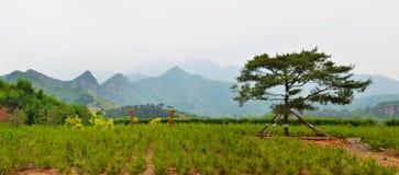Paesaggio rurale cinese fotografia stock libera da diritti