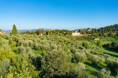 Paesaggio rurale con di olivo Fotografia Stock Libera da Diritti