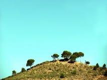 Paesaggio rurale con di olivo Fotografia Stock
