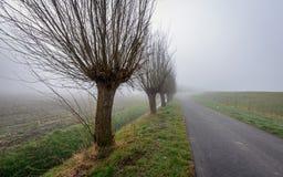 Paesaggio rurale con gli alberi di salice su una mattina nebbiosa Immagini Stock Libere da Diritti