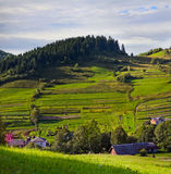 Paesaggio rurale con i campi e la casa verdi fertili dell'azienda agricola Fotografia Stock Libera da Diritti