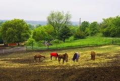 Paesaggio rurale con i cavalli nel giorno di estate piovoso Fotografia Stock