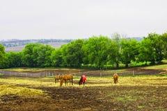 Paesaggio rurale con i cavalli nel giorno di estate piovoso Fotografia Stock Libera da Diritti