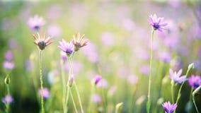 Paesaggio rurale con i fiori selvaggi in prato Bella priorità bassa della sorgente video d archivio