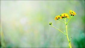 Paesaggio rurale con i fiori selvaggi in prato Bella priorità bassa della sorgente stock footage
