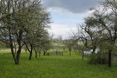 Paesaggio rurale con il frutteto di frutta Immagine Stock