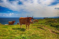 Paesaggio rurale con la mandria di mucche Immagine Stock