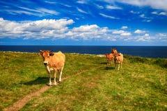 Paesaggio rurale con la mandria di mucche Fotografia Stock Libera da Diritti