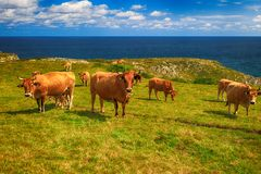 Paesaggio rurale con la mandria di mucche Fotografie Stock Libere da Diritti
