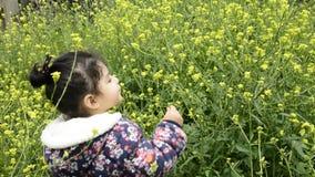 Paesaggio rurale con le piante gialle del giacimento del seme di ravizzone o del canola della violenza per energia verde stock footage