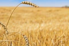 Paesaggio rurale con una coccinella Immagine Stock Libera da Diritti
