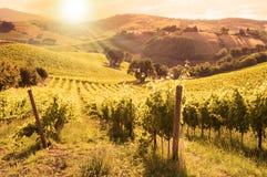 Paesaggio rurale con una vigna verde fra le colline immagine stock