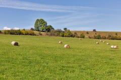 Paesaggio rurale del pascolo con i mucchi di fieno Fotografia Stock Libera da Diritti