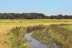Paesaggio rurale del prato con Reed ed il piccolo canale Alberi su Horiz Fotografie Stock