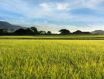 Paesaggio rurale dell'azienda agricola della risaia Immagine Stock