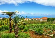Paesaggio rurale dell'isola del Madera, Portogallo, villaggio Santana Immagine Stock