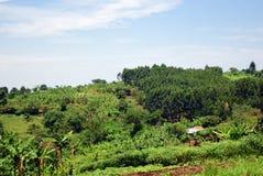 Paesaggio rurale dell'Uganda, Africa Fotografie Stock Libere da Diritti