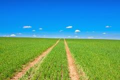 Paesaggio rurale della molla con la strada ed il cielo blu del campo Fotografie Stock Libere da Diritti