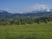 Paesaggio rurale della montagna della bella molla nelle alpi bavaresi con il villaggio ed il massiccio innevato dei picchi di mon fotografie stock libere da diritti