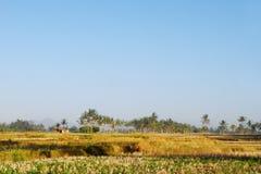Paesaggio rurale della piantagione di Balinese Fotografia Stock Libera da Diritti
