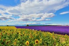 Paesaggio rurale della Provenza, Francia fotografie stock