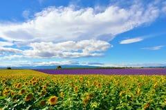 Paesaggio rurale della Provenza, Francia immagini stock