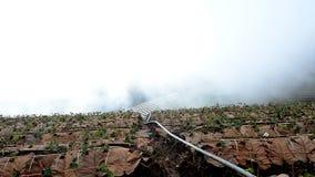 Paesaggio rurale di arte Mattina alla bella azienda agricola della fragola stock footage