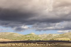 Paesaggio rurale di autunno: Alta Murgia National Park, Italia Campagna collinosa dominata dalle nuvole: moltitudine di pecore ch Fotografia Stock