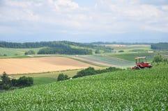 Paesaggio rurale di Biei nell'Hokkaido, Giappone Fotografia Stock Libera da Diritti