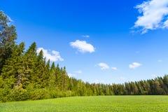 Paesaggio rurale di estate, campo verde vuoto fotografie stock