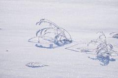 Paesaggio rurale di inverno del prato sotto neve Fotografia Stock Libera da Diritti