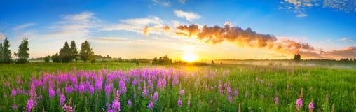 Paesaggio rurale di panorama con alba ed il prato sbocciante fotografia stock