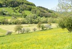 Paesaggio rurale di primavera Immagine Stock