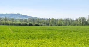 Paesaggio rurale di primavera Immagine Stock Libera da Diritti