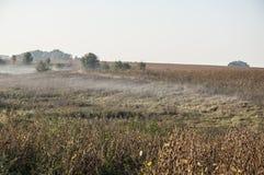 Paesaggio rurale di primo mattino con nebbia Immagine Stock Libera da Diritti